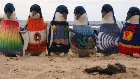 110 évesen meghalt a pingvineknek kötögető bácsi