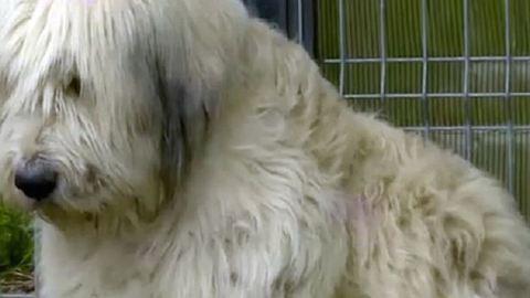 Szívszorító történet: 5 éve őrzi halott gazdája házát a hűséges kutya