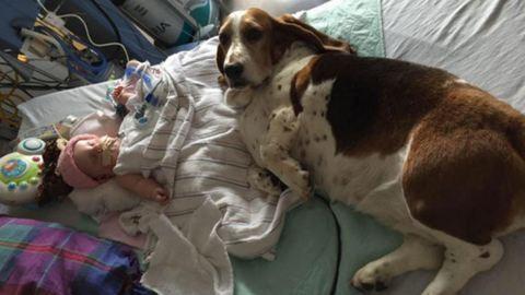 Egy tapodtat sem mozdultak a kómában fekvő kislány mellől a család kutyái