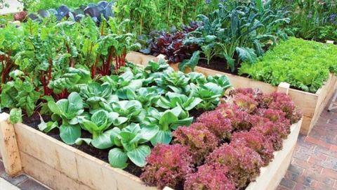 5 tipp kezdő kertészeknek: így ültesd el a növényeket