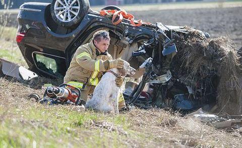 Tűzoltók, akik életüket kockáztatták az állatokért – fotók