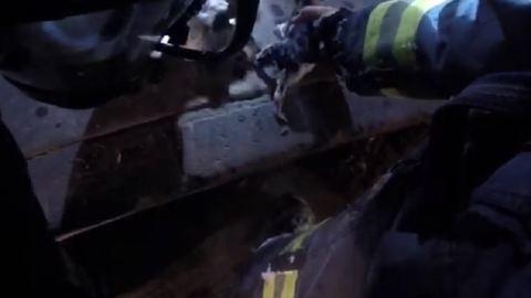 4 kiscicát mentettek ki az égő házból a tűzoltók – videó