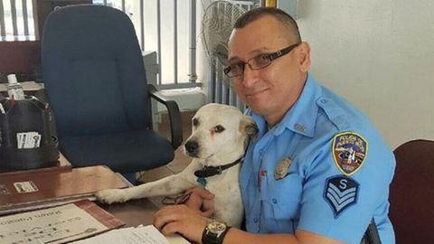 Besétált a rendőrségre a gazdátlan kutyus – munkát kapott