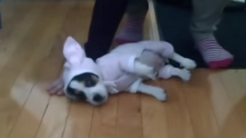 Teljesen kidőlt a nyuszijelmezes kutya – cuki videó