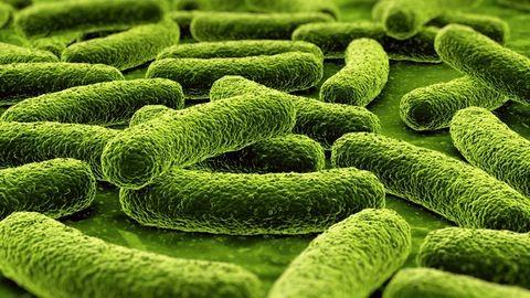 Tbc, skarlát: ezeket már leküzdöttük, vagy nem?