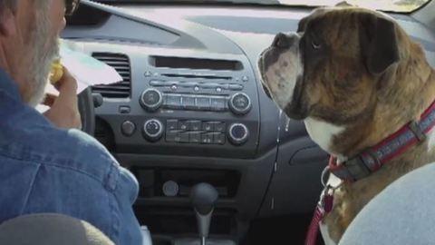 Így kunyerál egy igazán nyálas kutya – videó