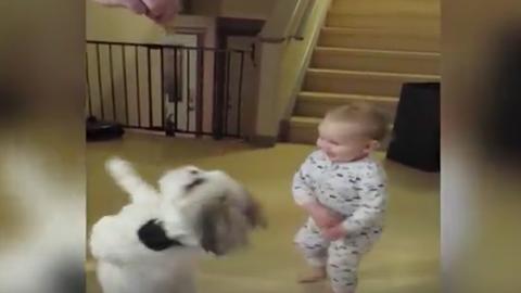 Kutyát utánoz a jutalomfalatra vágyó kisbaba – cuki videó