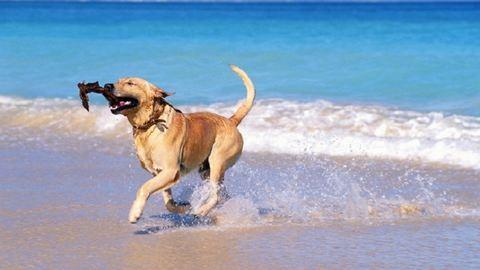 4 tipp, amit tarts észben, ha a kutyáddal mész strandolni