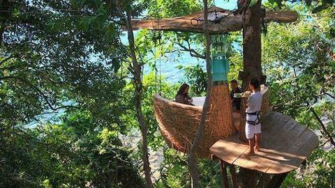 Madárfészek-étterem a fa tetején – bámulatos fotók