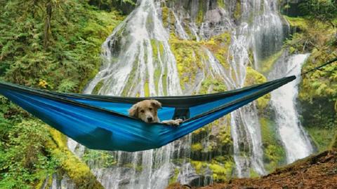 Ennek a kutyának a kalandjaira tutira féltékeny leszel – mesés fotók