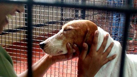 Egész életét egy laborban élte – először lát napfényt a kutya