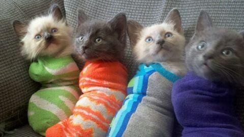 A zokniba csomagolt cicák a net új sztárjai