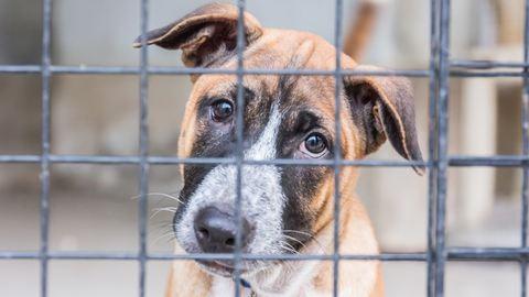 Vége lehet a szabad kutyasétáltatásnak a Városligetben