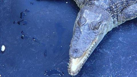 Nem találják a nőt, akit egy krokodil rángatott el