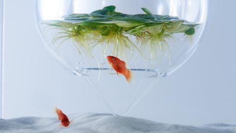 A 3D nyomtatott akvárium az új menőség – fotók