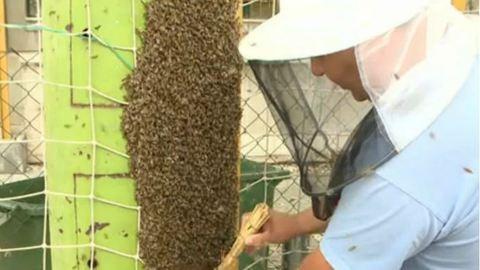 Durva méhinvázió egy óbudai iskolában