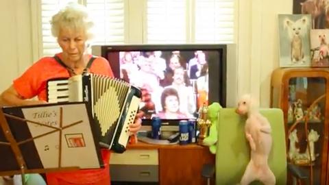 Harmonikázó nagyi zenéjére ropja a kopasz kutya – videó