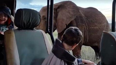 Nézd meg a gyerekcsoport reakcióját, miután testközelből láttak egy elefántot - videó