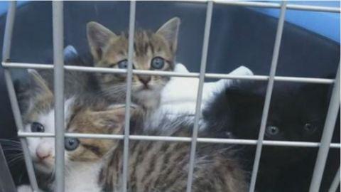 Speciális mentők szabadították ki a klímába szorult kismacskákat