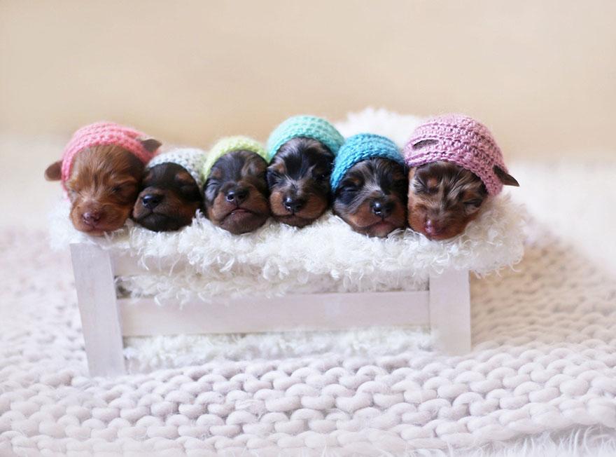 Ennek a tacskónak vannak a legcukibb kismama fotói