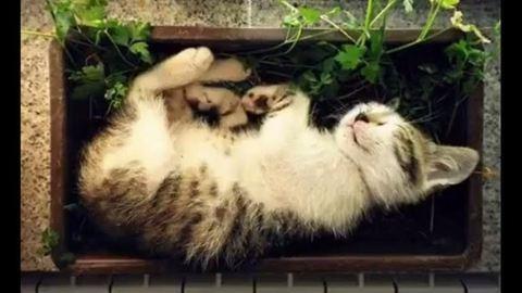 Ilyen, amikor a cicák segítenek a növények nevelésében – videó