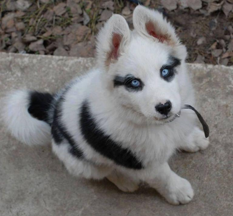 Elképesztő mintákat viselnek ezek az állatok!
