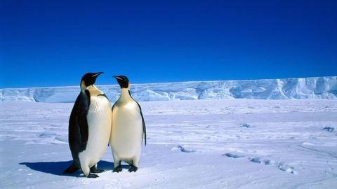 10 megdöbbentő dolog, amit nem tudtál az Antarktiszról