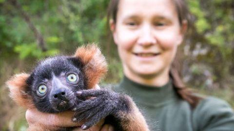 Vörös vari született a Veszprémi Állatkertben