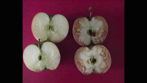 Almákon mutatta meg a tanár, milyen hatása van a zrikálásnak