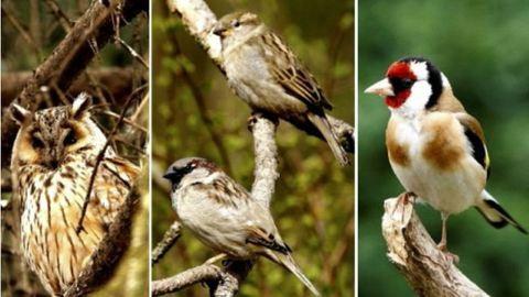 Megkezdődött a madarak versenye a szavazatokért