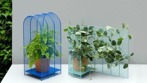 Így tuningold fel a növényed – fotók