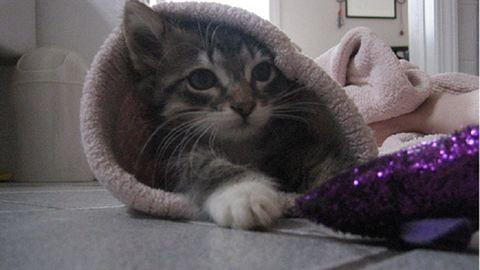 Derítsd ki, hogy mikor született a cicád, és nézd meg a macskahoroszkópját!