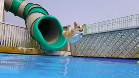 Vízicsúszdával hűti le magát a cuki kutya – videó