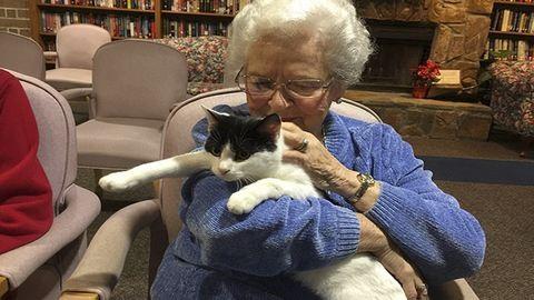 Menhelyi macskák dobják fel az idősotthon lakóit