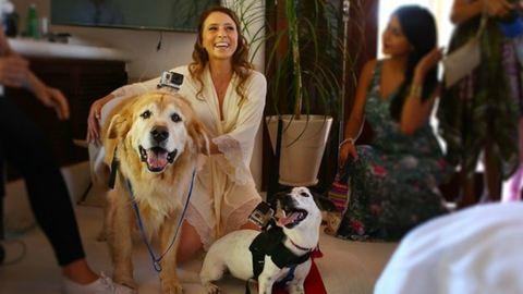 Menhelyi kutyák vették fel az ifjú pár egész esküvőjét – videó