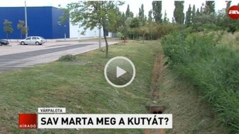 Szörnyű halált halt egy kutya Várpalotán
