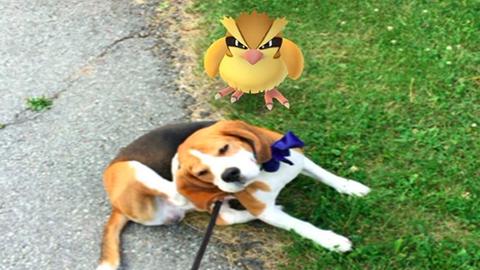 8 kutya, aki már nem akar több Pokémont elkapni – fotók