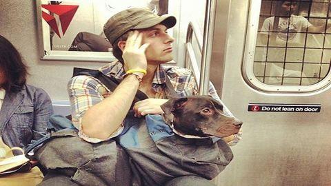 Így utaznak a kutyák a New York-i metrón