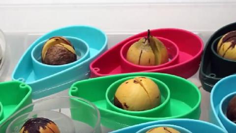 Így nevelhetsz avokádót otthon – videó