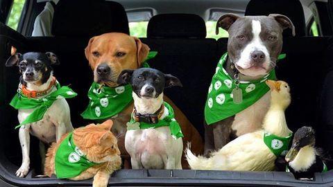Állatokkal és boldogsággal teli házban él a pár, amelyik 7 kedvencet fogadott örökbe