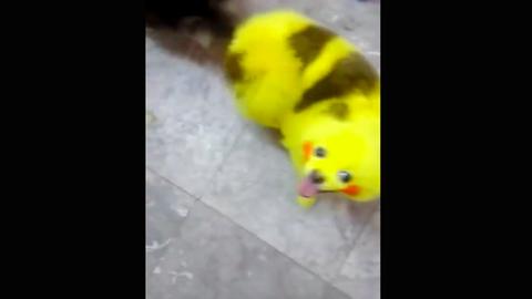 Durva módszerrel csinált pokémont kutyájából a megszállott Pokémon Go-rajongó