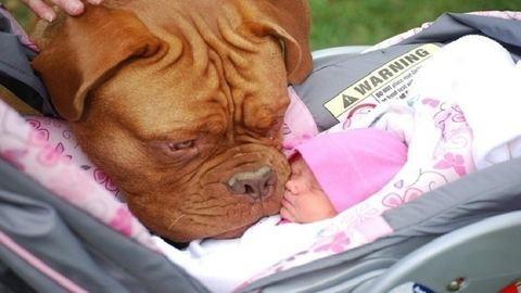 14 fotó, ami bizonyítja, hogy a kutyáknál nem létezik jobb barát