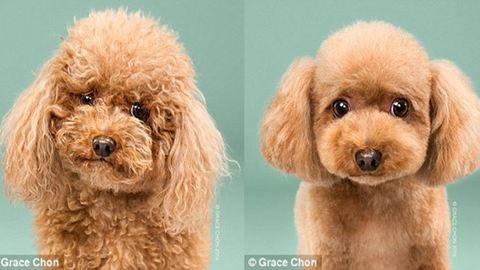 Kutyák szépítkezés előtt és után – készülj életed fotósorozatára
