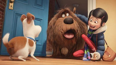 Figyelem, a film után azonnal akarsz magadnak egy kiskutyát! – Megnéztük A kis kedvencek titkos életét