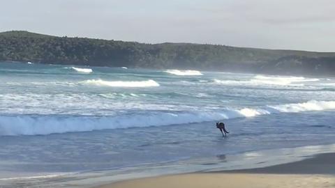 A tengerparton szökdécselő kengurunál kevés jobb dolog létezik