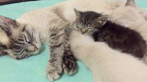 Két anyukája is lett az árva kiscicának – cuki fotók