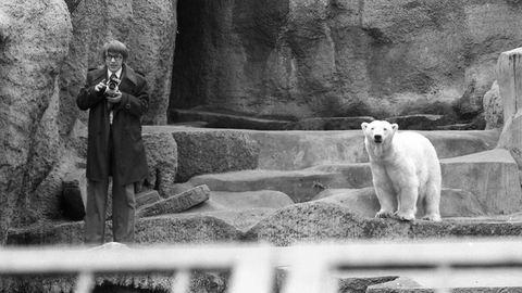 Több, mint 70 éves Samu, a legidősebb lakója: 150 éves a Fővárosi Állatkert