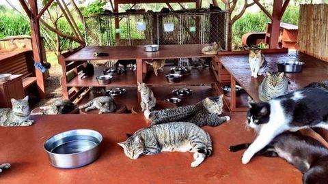 A macskamennyország, ahova a világ minden tájáról özönlenek a cicabarátok
