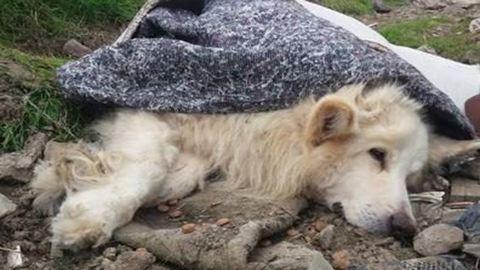 """Elpusztult a kutya, akit """"gazdái"""" egy szőnyegbe csavarva dobtak ki a szeméttelepre"""