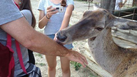 Pötyi néni, a szarvastehén minden látogatót megnyalogat – a Nógrádi Vadasparkban jártunk